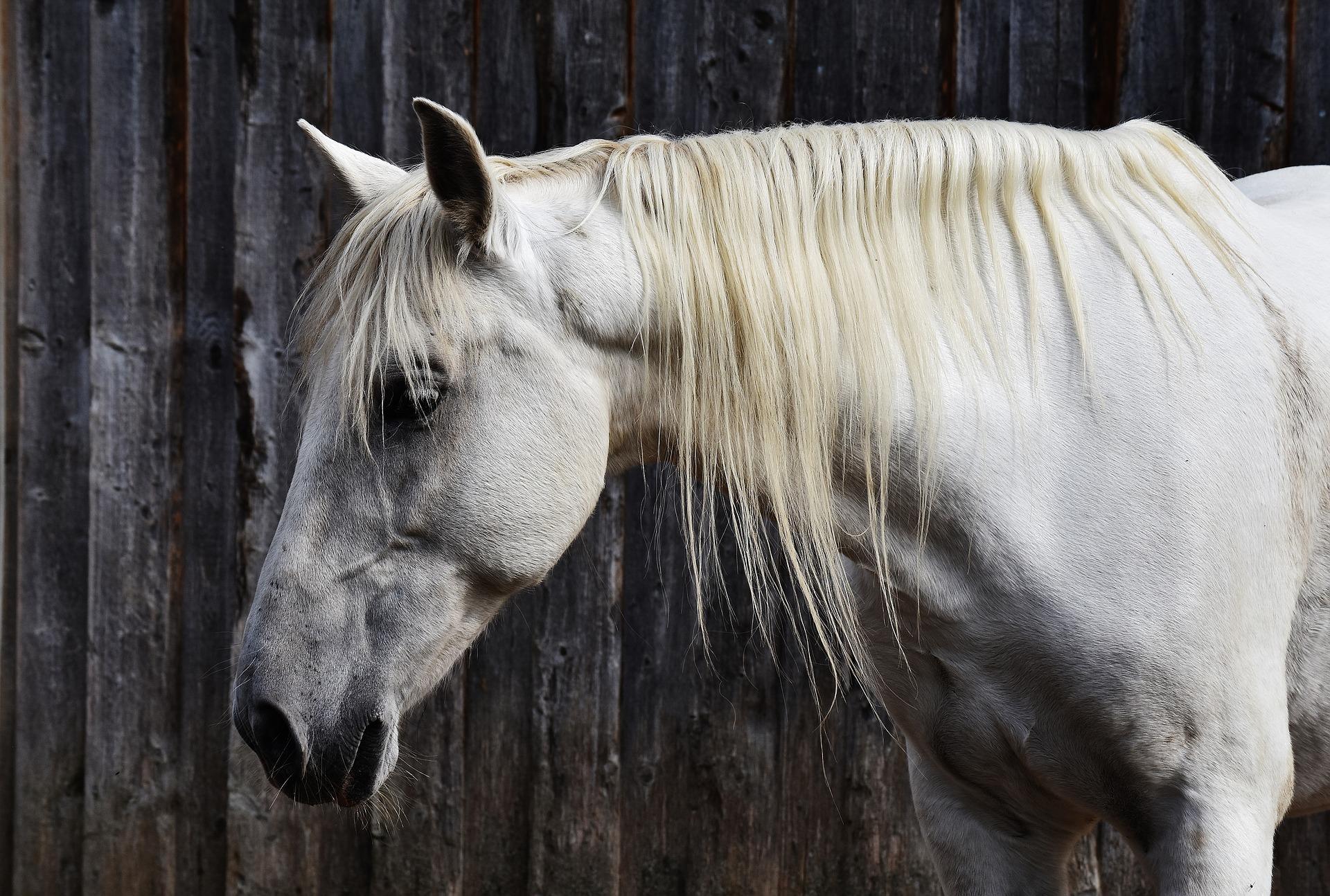horse-1700438_1920