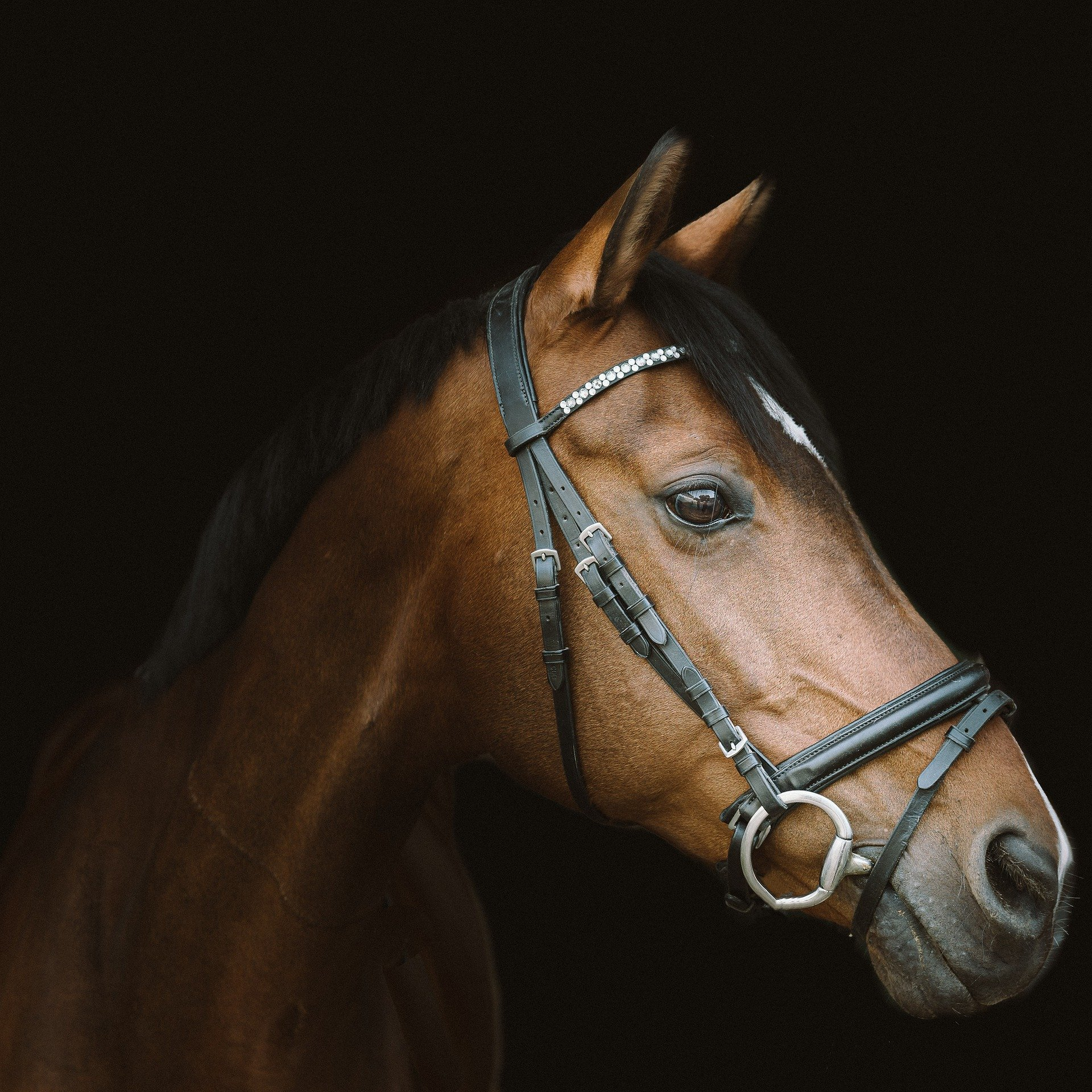 horse-4330166_1920